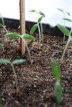 seedlings-2