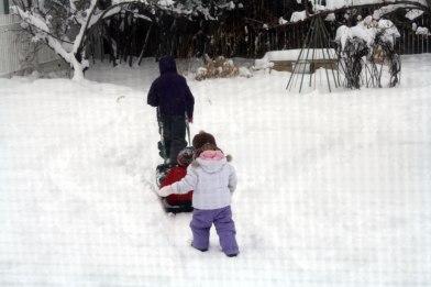 sled-pulling-2