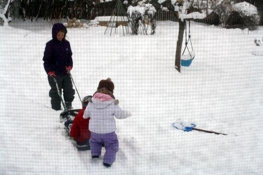 sled-pulling
