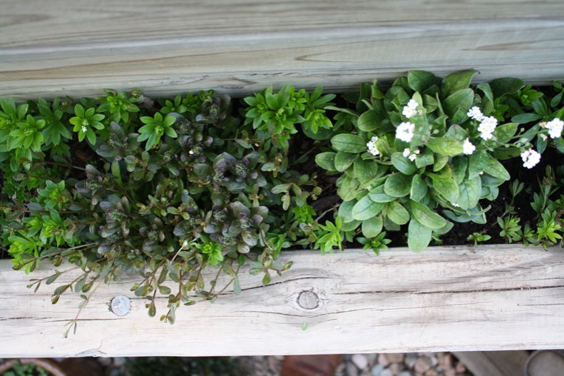 mixed-planting
