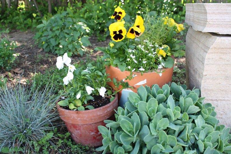 pots-and-sedum