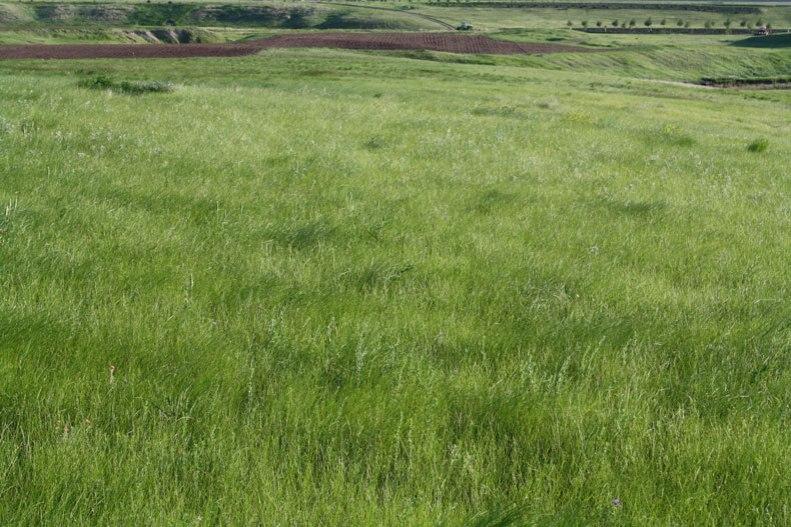 endless-prairie