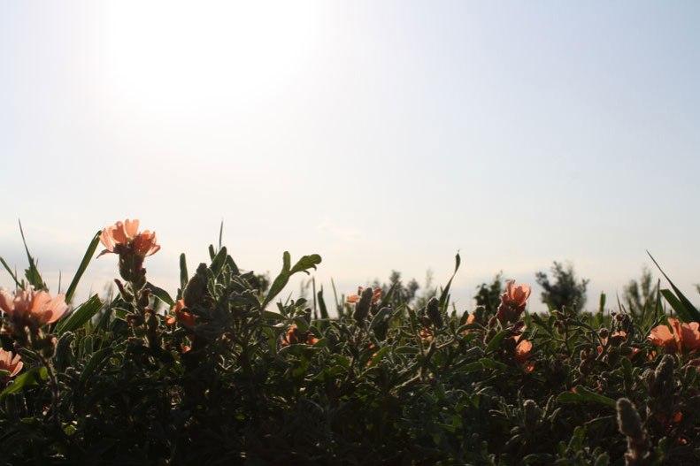 little-orange-flowers
