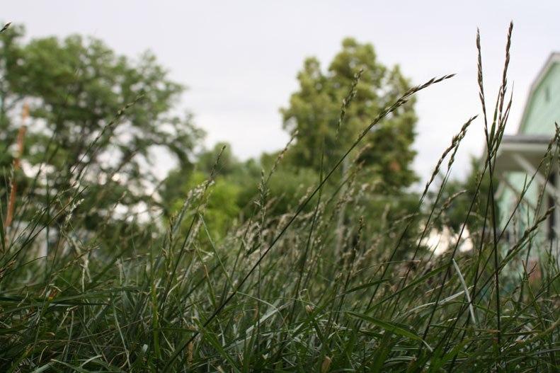 meadow-4
