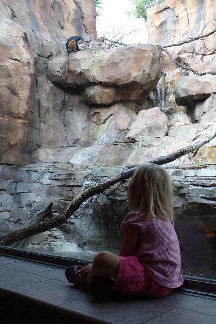 P-watching-monkeys