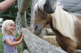 P-with-ponies