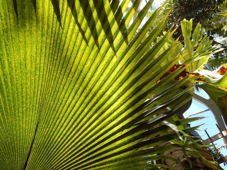 big-palm