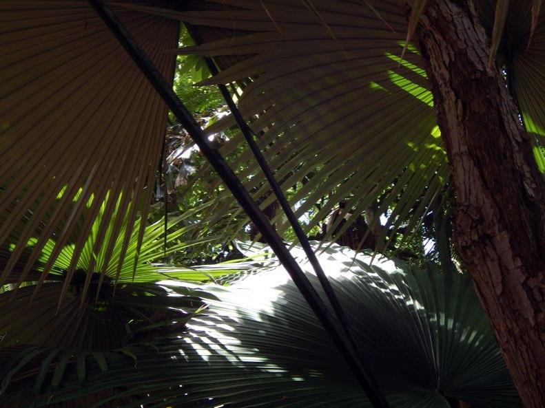 Palm-shadows